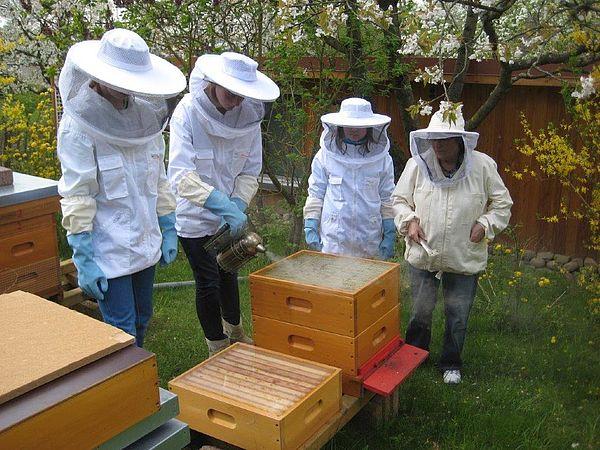 Vier Personen in weißem Stichschutz bei ihrer Arbeit mit den Bienen